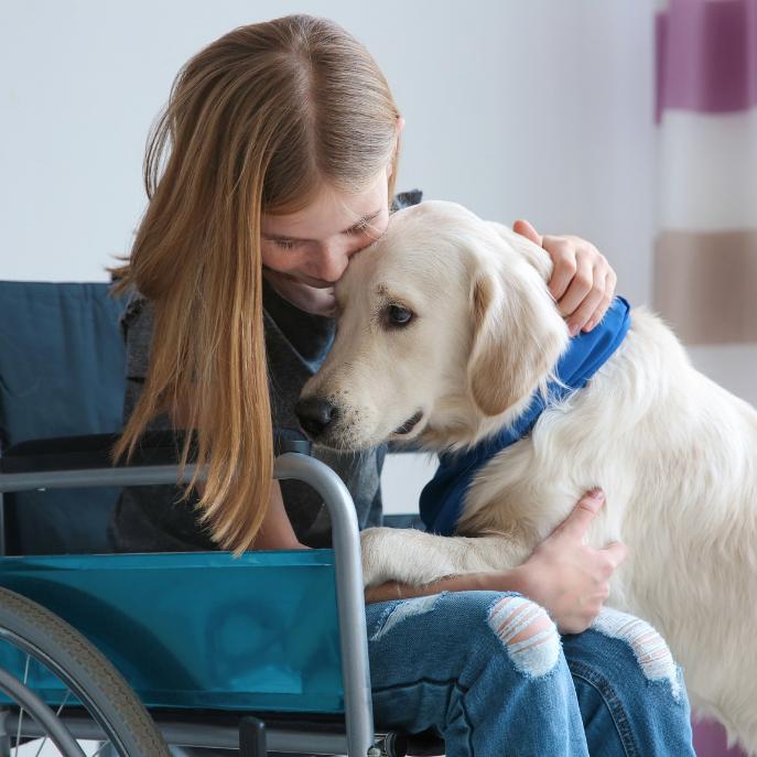 Chien d'assistance - handicap - chaise roulante - enfant
