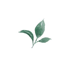 Une feuille verte d'un arbre